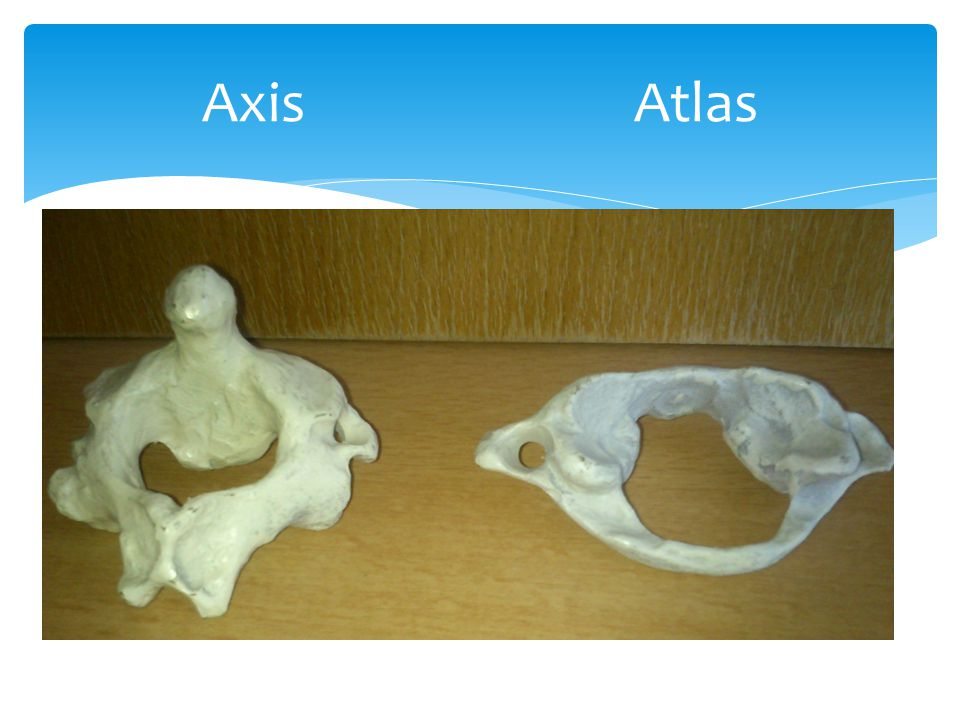 Axis Atlas