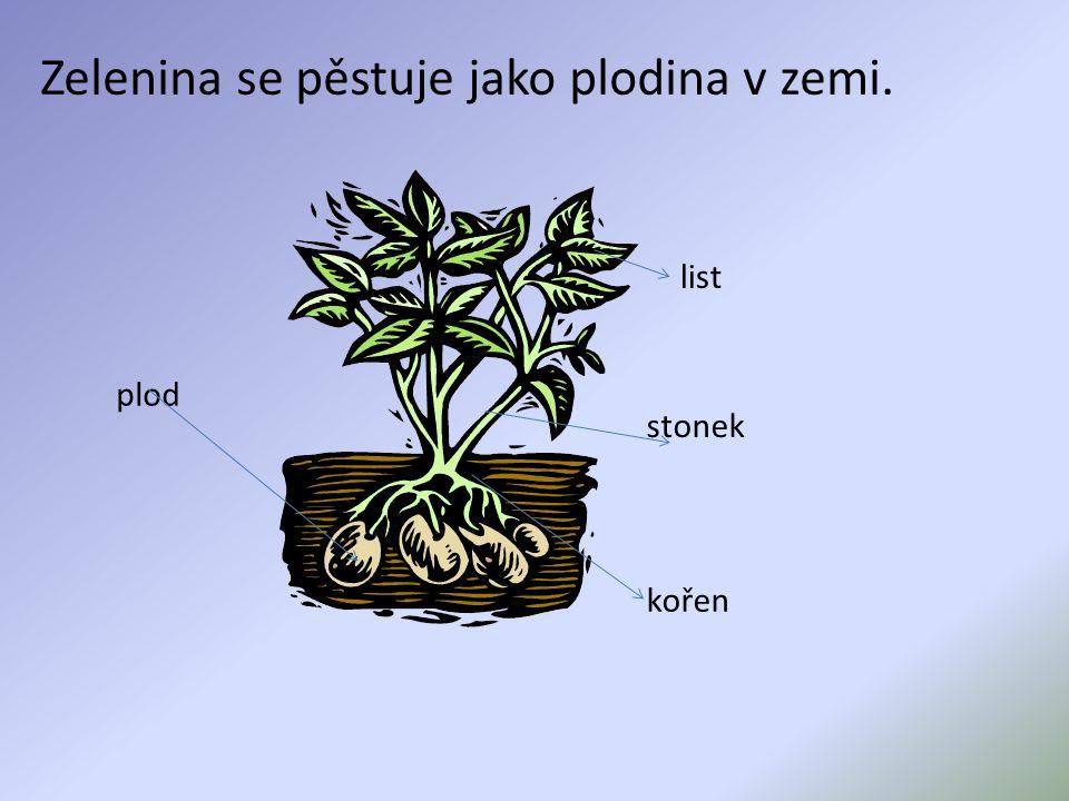 Zelenina se pěstuje jako plodina v zemi.