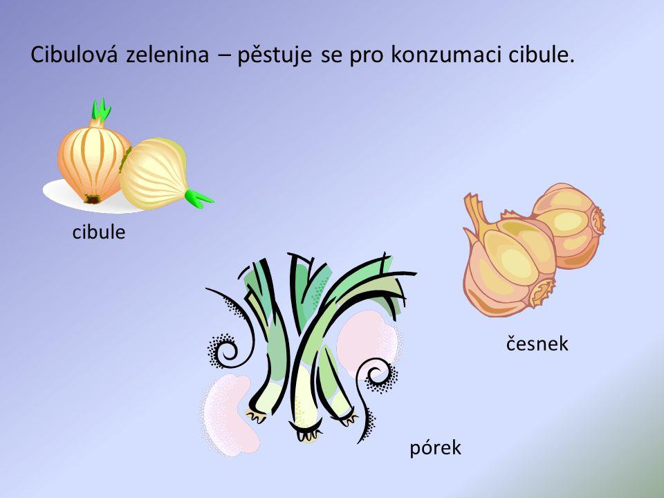 Cibulová zelenina – pěstuje se pro konzumaci cibule.