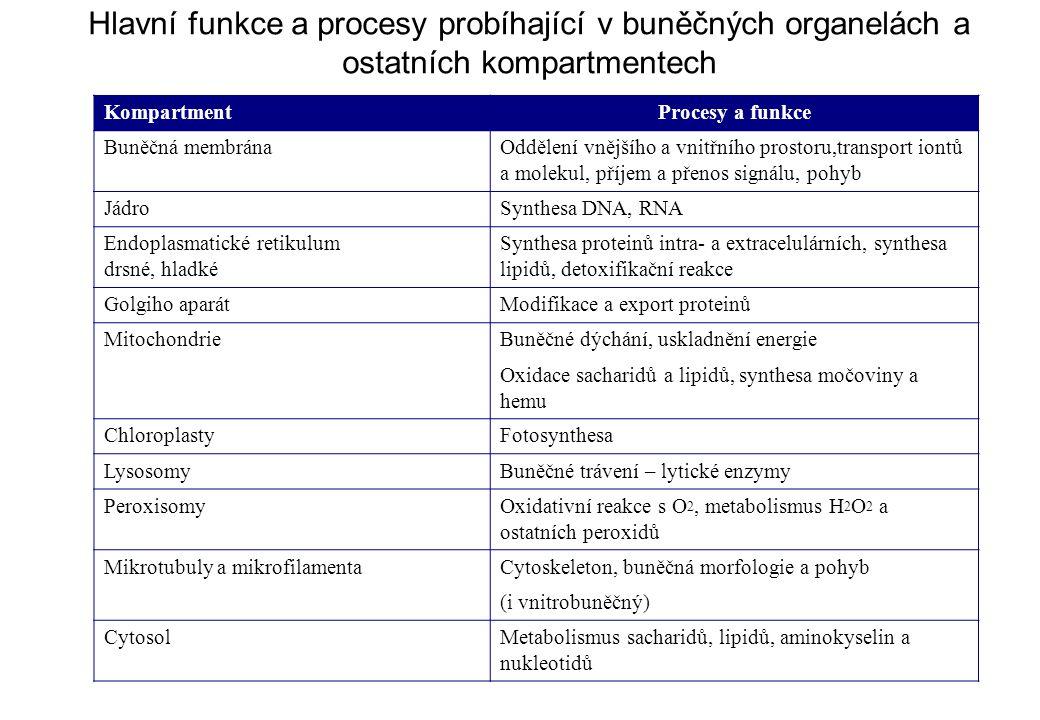 Hlavní funkce a procesy probíhající v buněčných organelách a ostatních kompartmentech