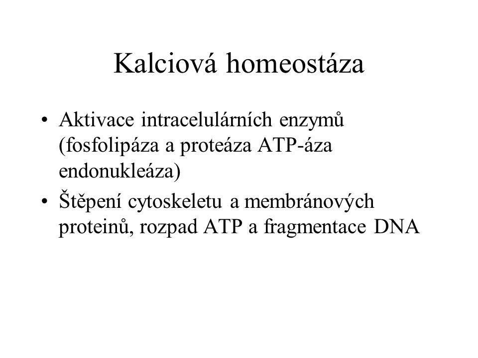 Kalciová homeostáza Aktivace intracelulárních enzymů (fosfolipáza a proteáza ATP-áza endonukleáza)