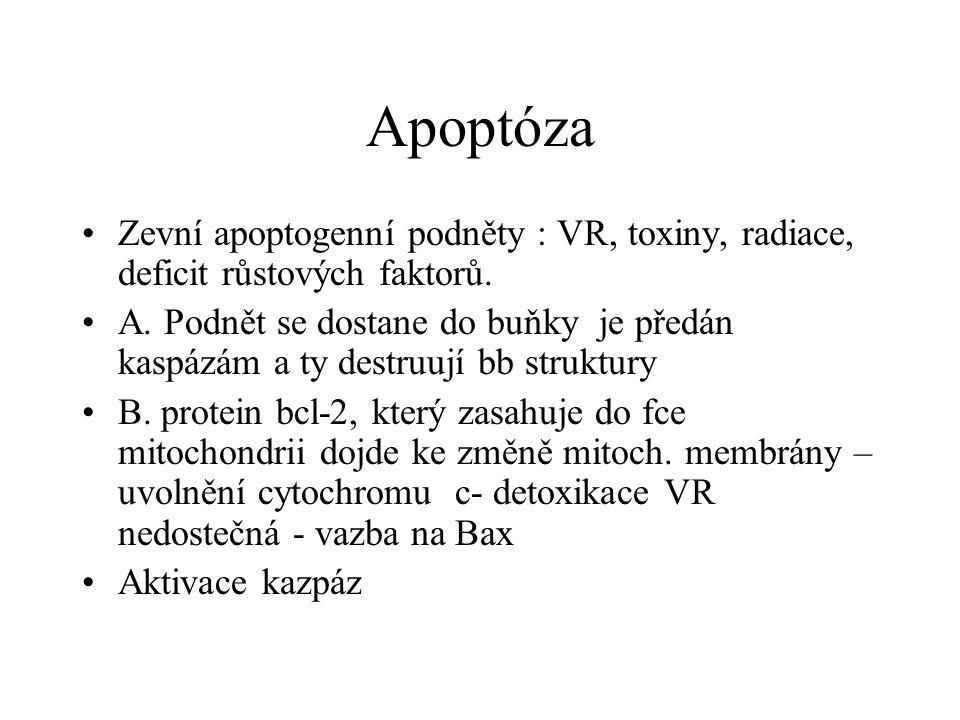 Apoptóza Zevní apoptogenní podněty : VR, toxiny, radiace, deficit růstových faktorů.