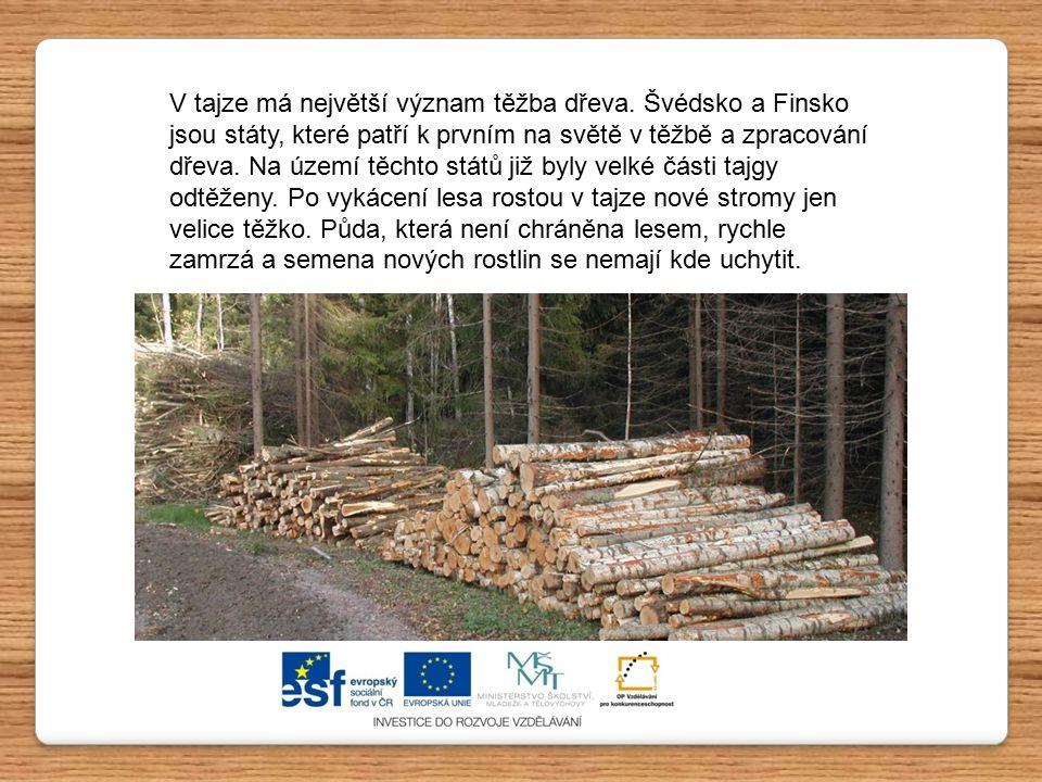 V tajze má největší význam těžba dřeva