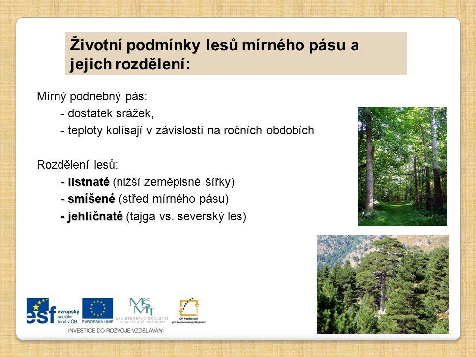 Životní podmínky lesů mírného pásu a jejich rozdělení: