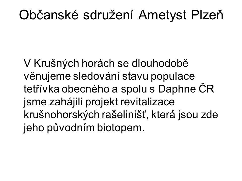 Občanské sdružení Ametyst Plzeň