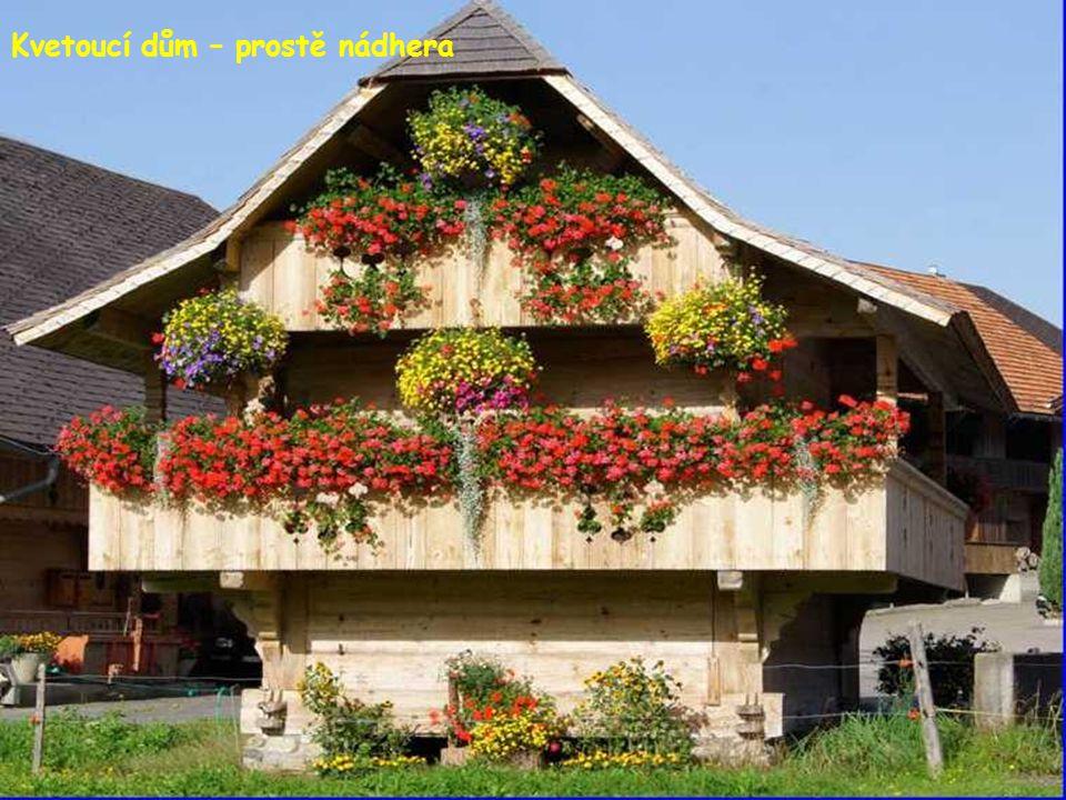 Kvetoucí dům – prostě nádhera