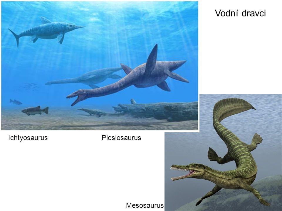 Vodní dravci Ichtyosaurus Plesiosaurus Mesosaurus