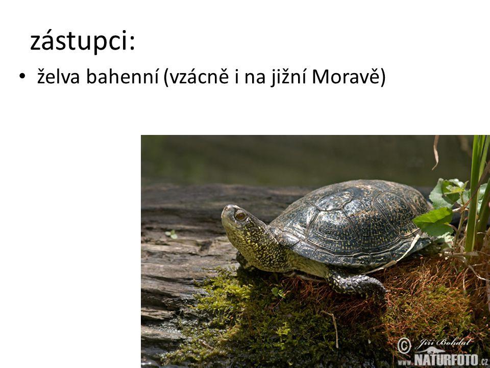 zástupci: želva bahenní (vzácně i na jižní Moravě)