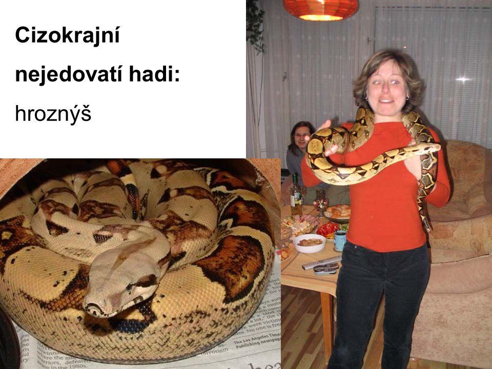 Cizokrajní nejedovatí hadi: hroznýš
