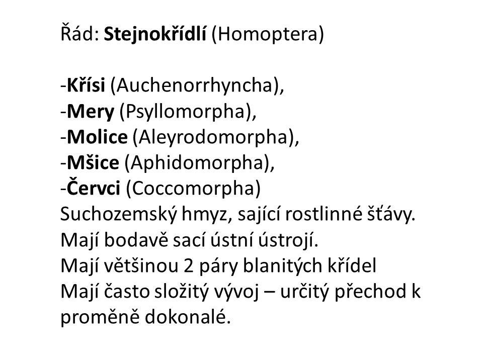 Řád: Stejnokřídlí (Homoptera)