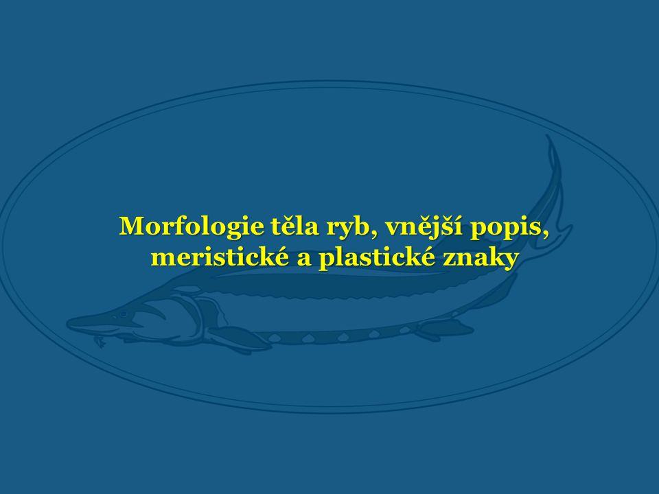 Morfologie těla ryb, vnější popis, meristické a plastické znaky
