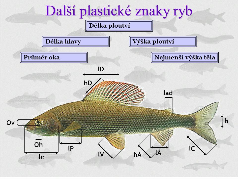 Další plastické znaky ryb