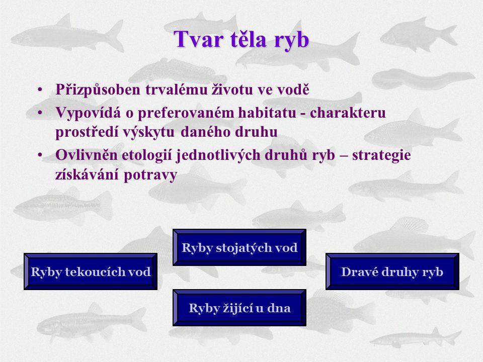 Tvar těla ryb Přizpůsoben trvalému životu ve vodě