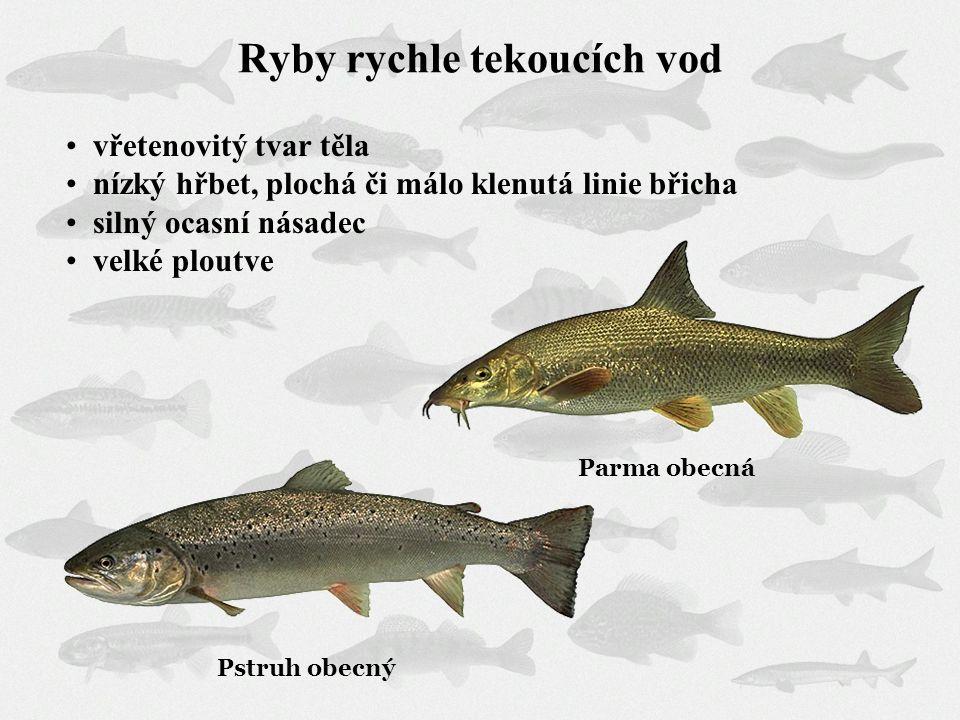 Ryby rychle tekoucích vod