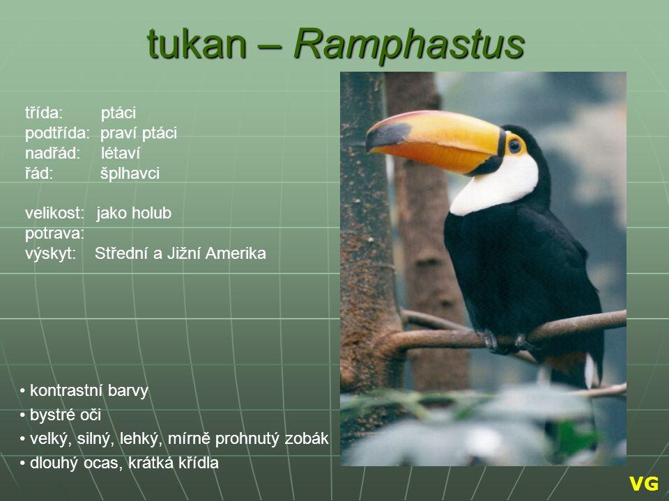 tukan – Ramphastus VG třída: ptáci podtřída: praví ptáci