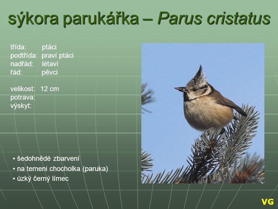sýkora parukářka – Parus cristatus