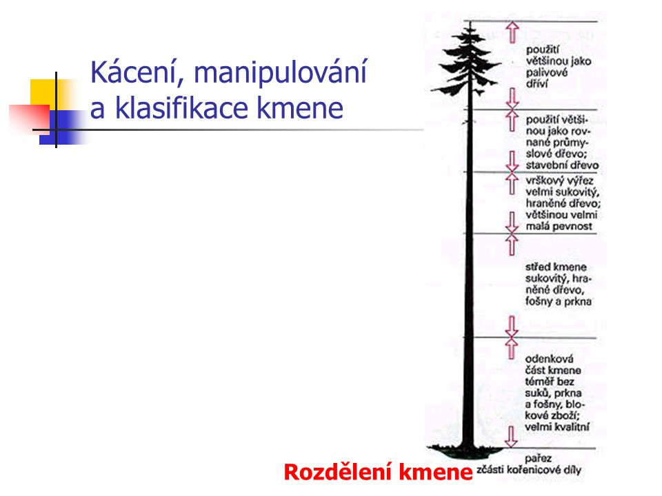 Kácení, manipulování a klasifikace kmene