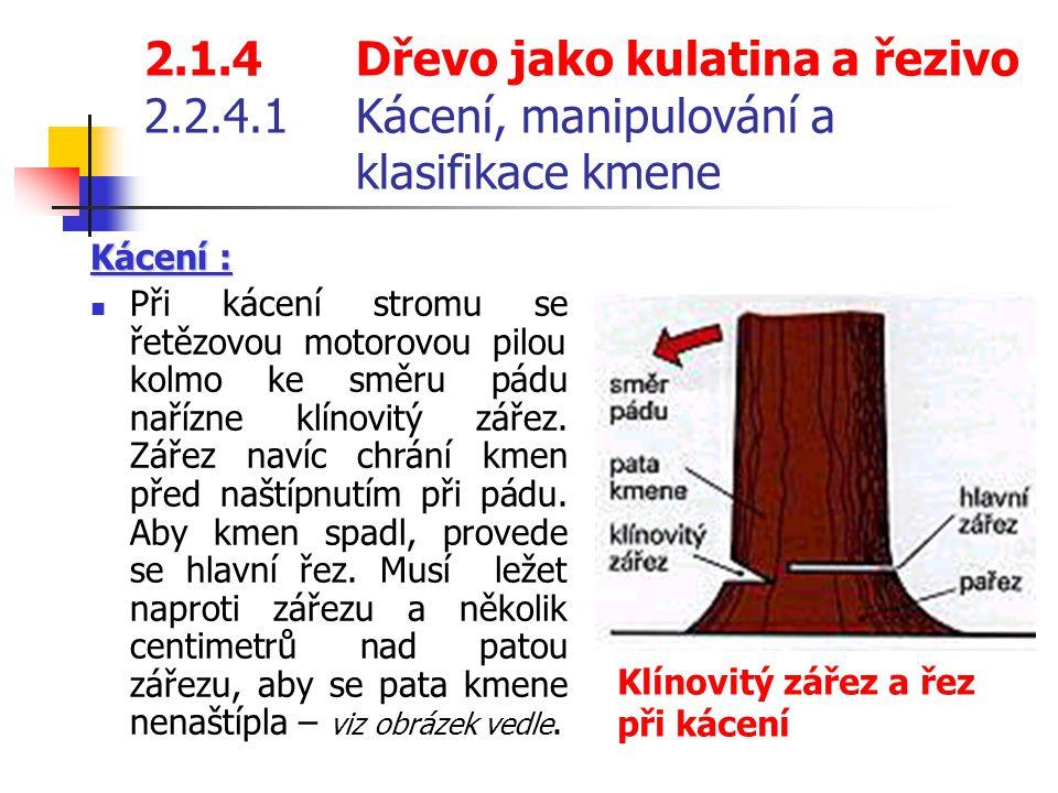 2. 1. 4. Dřevo jako kulatina a řezivo 2. 2. 4. 1