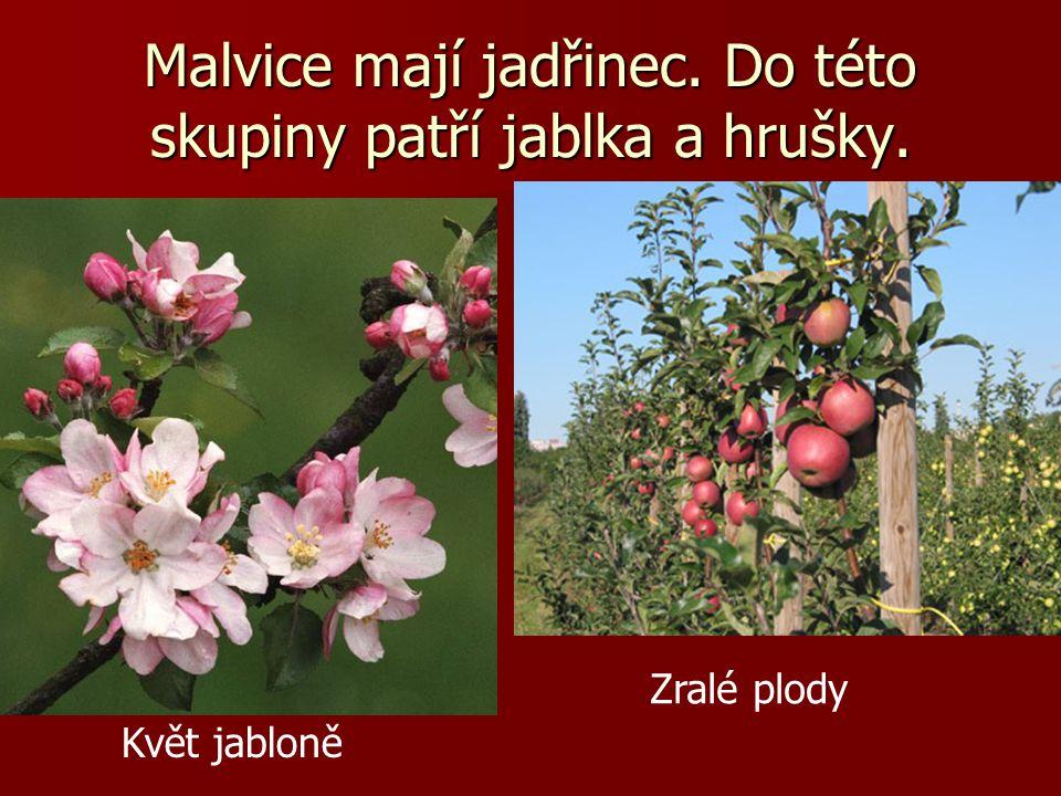 Malvice mají jadřinec. Do této skupiny patří jablka a hrušky.