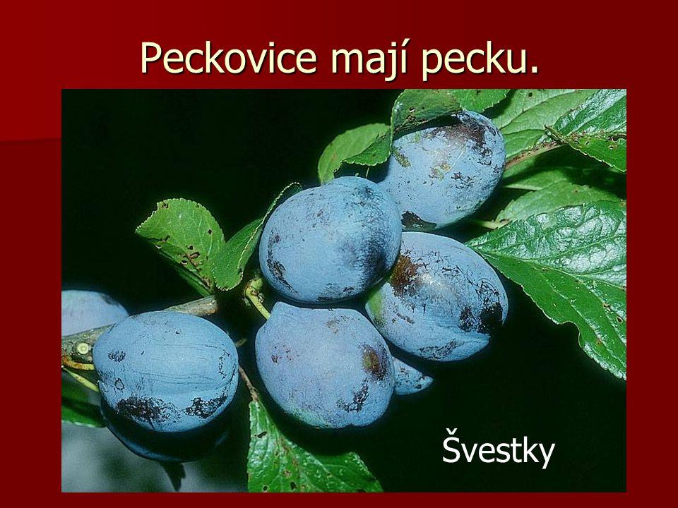 Peckovice mají pecku. Švestky