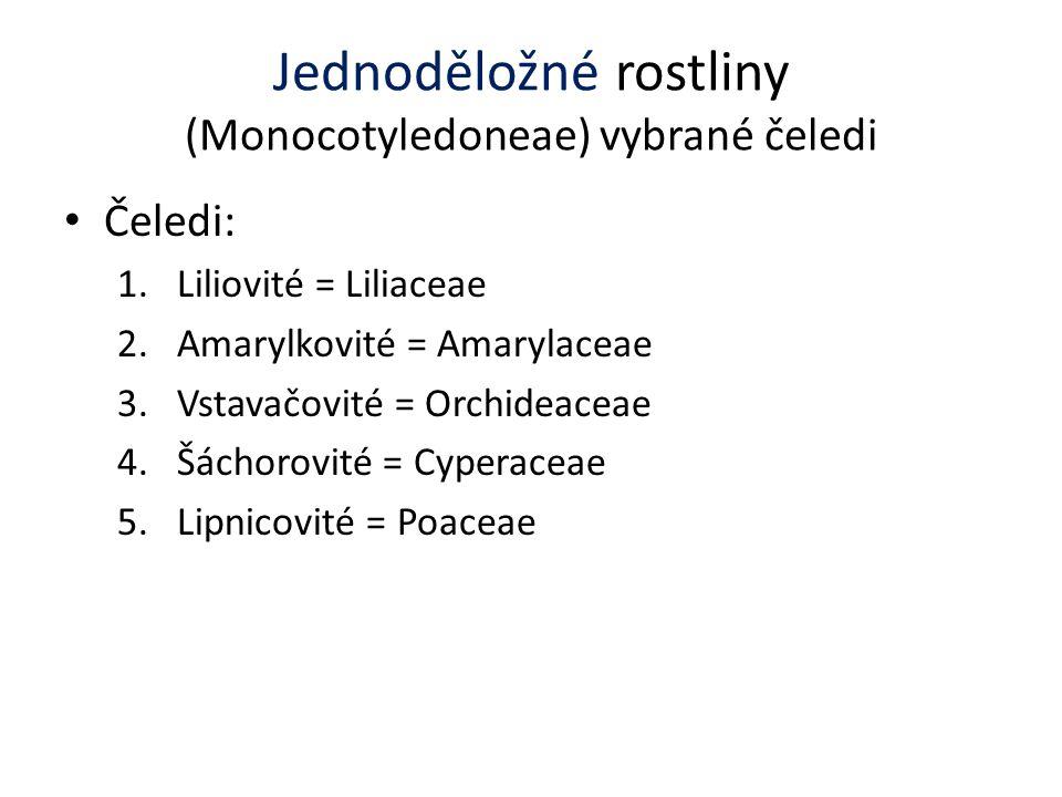 Jednoděložné rostliny (Monocotyledoneae) vybrané čeledi