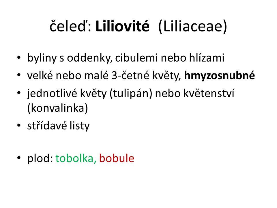 čeleď: Liliovité (Liliaceae)