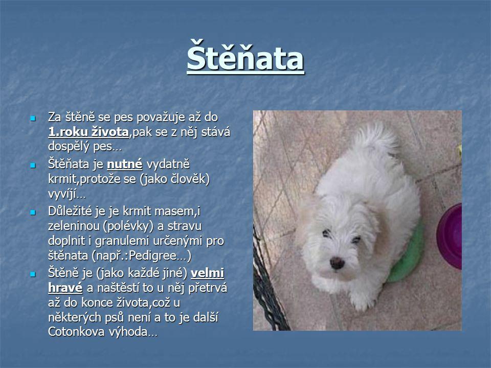 Štěňata Za štěně se pes považuje až do 1.roku života,pak se z něj stává dospělý pes… Štěňata je nutné vydatně krmit,protože se (jako člověk) vyvíjí…