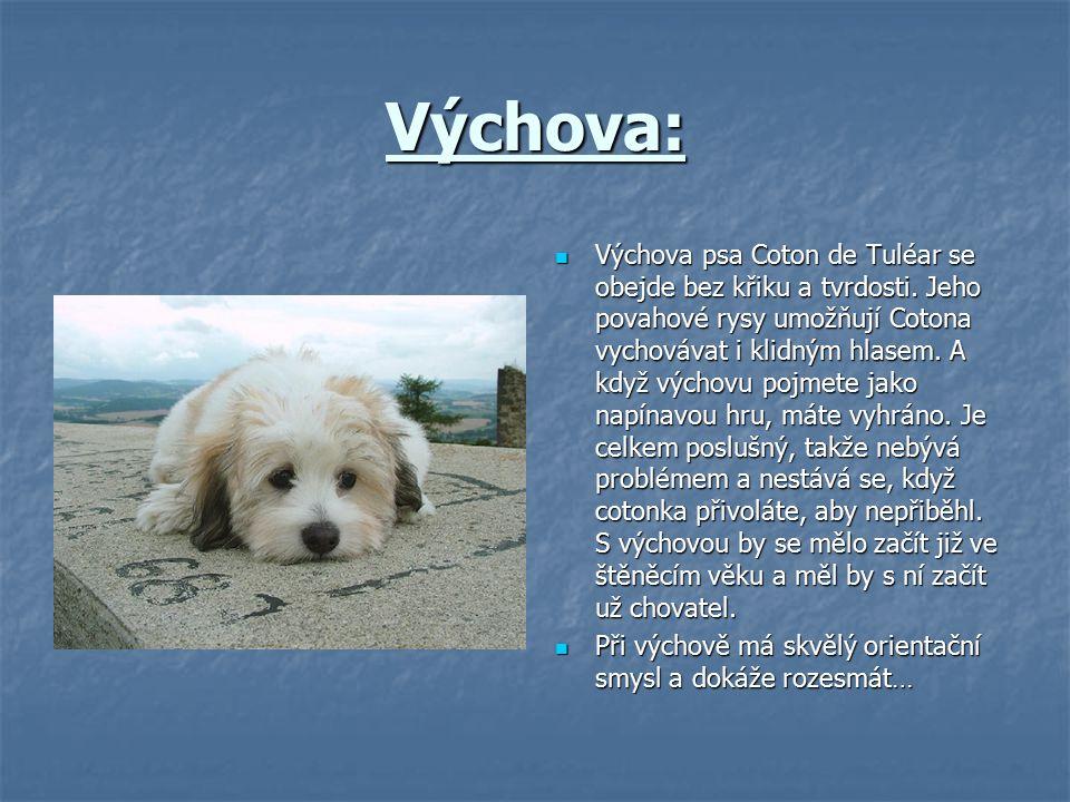 Výchova: