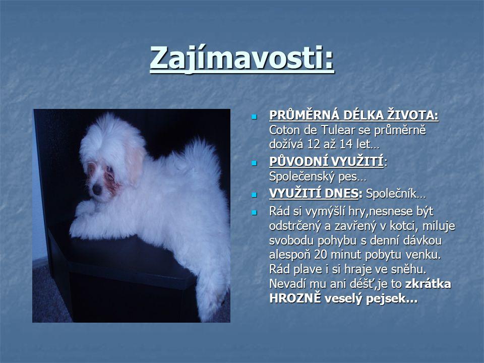 Zajímavosti: PRŮMĚRNÁ DÉLKA ŽIVOTA: Coton de Tulear se průměrně dožívá 12 až 14 let… PŮVODNÍ VYUŽITÍ: Společenský pes…