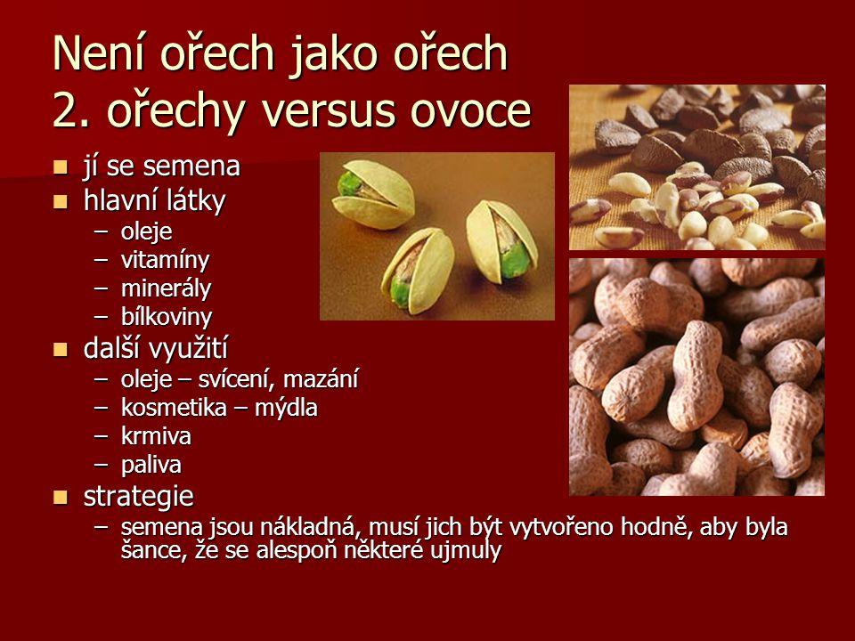 Není ořech jako ořech 2. ořechy versus ovoce