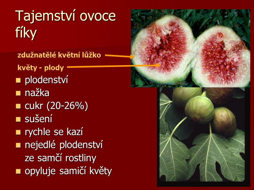 Tajemství ovoce fíky plodenství nažka cukr (20-26%) sušení