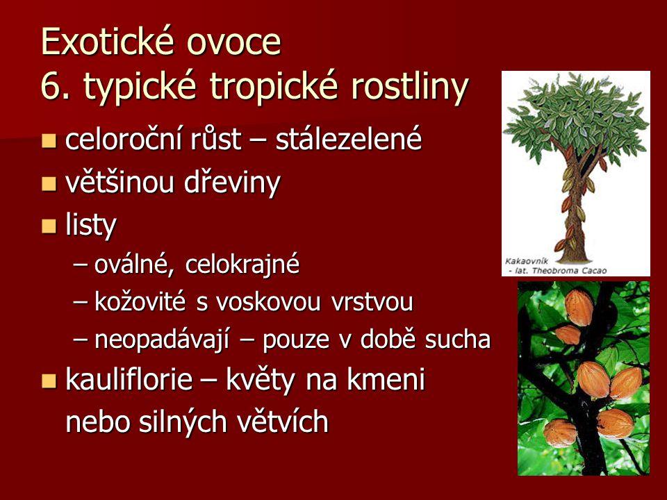 Exotické ovoce 6. typické tropické rostliny