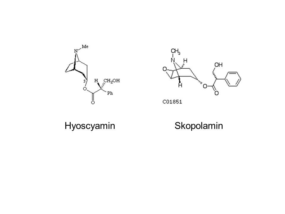 Hyoscyamin Skopolamin