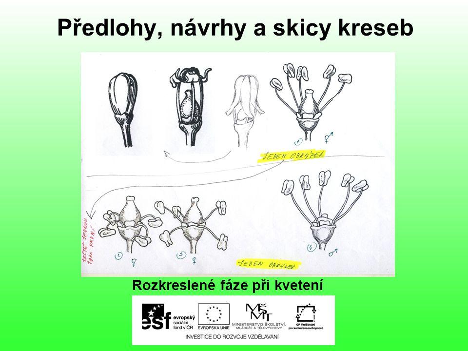 Předlohy, návrhy a skicy kreseb