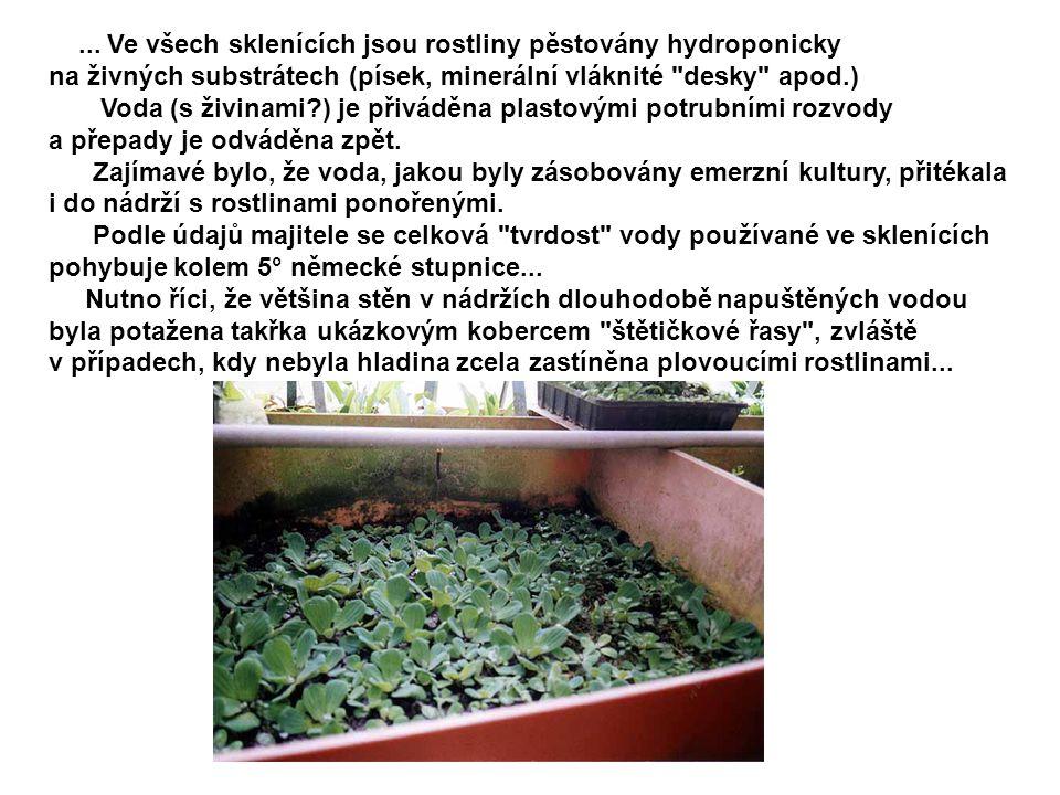 ... Ve všech sklenících jsou rostliny pěstovány hydroponicky