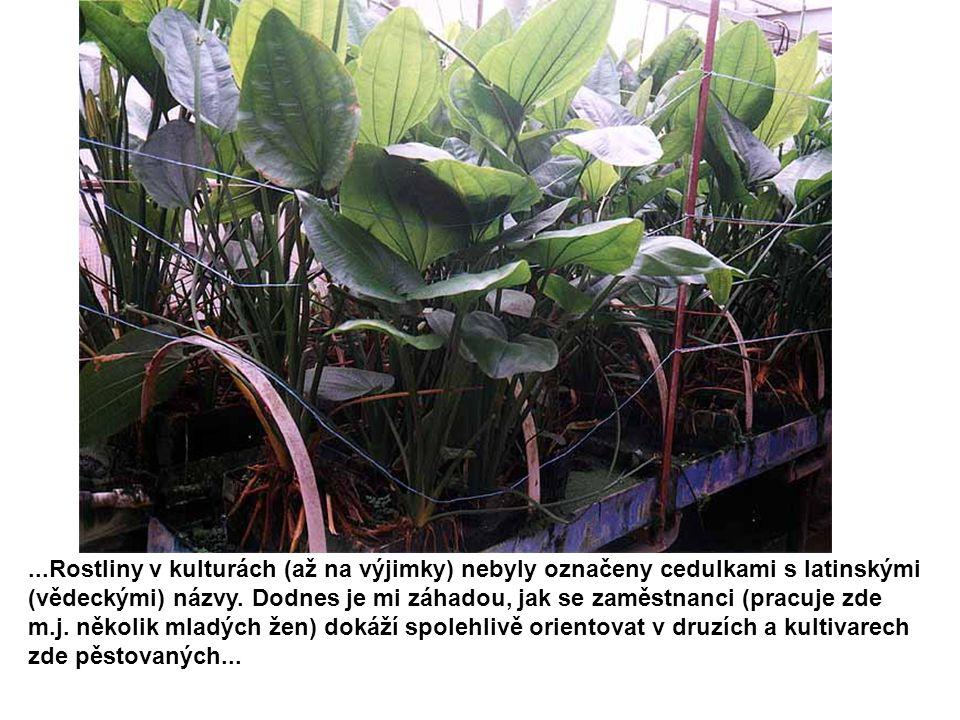 ...Rostliny v kulturách (až na výjimky) nebyly označeny cedulkami s latinskými (vědeckými) názvy.