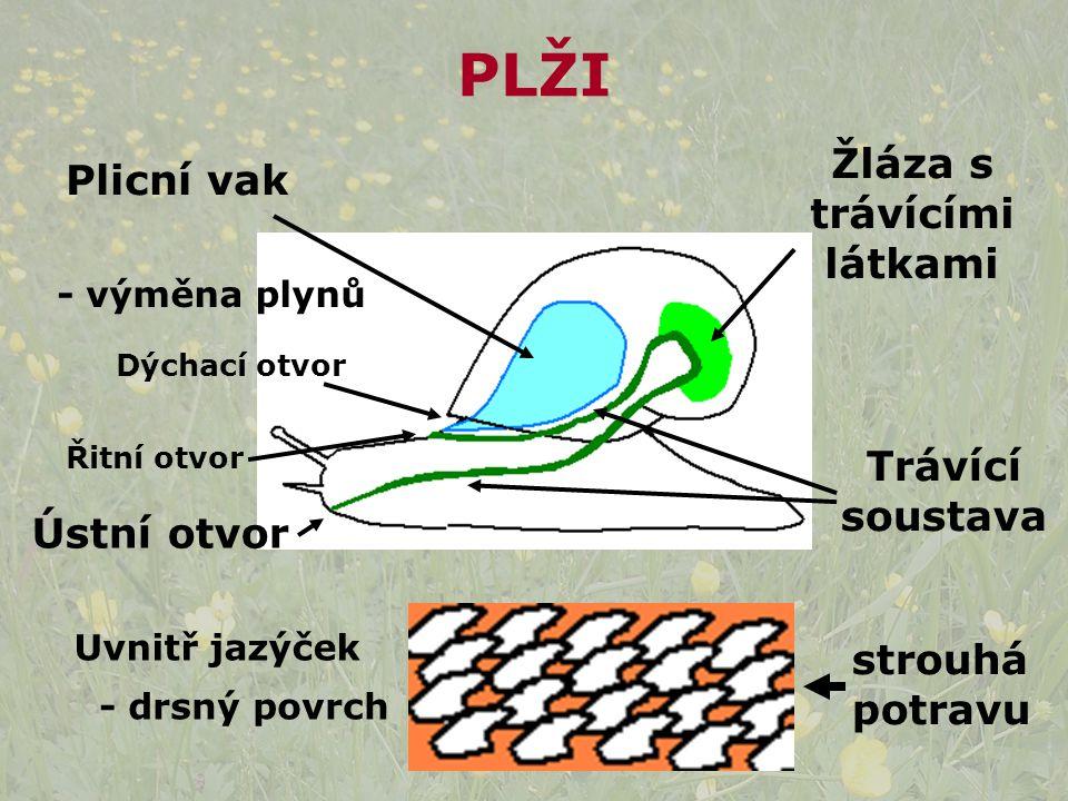Žláza s trávícími látkami