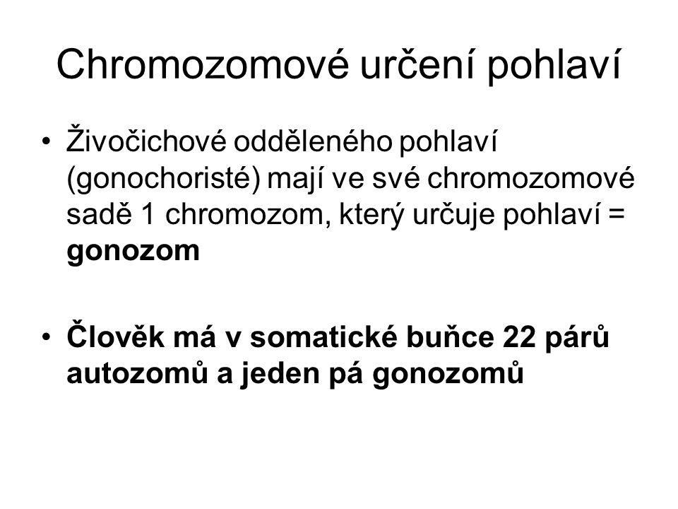 Chromozomové určení pohlaví