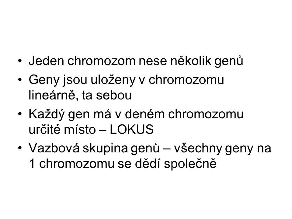 Jeden chromozom nese několik genů