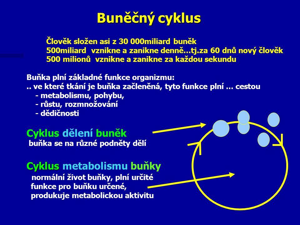 Buněčný cyklus Cyklus dělení buněk Cyklus metabolismu buňky