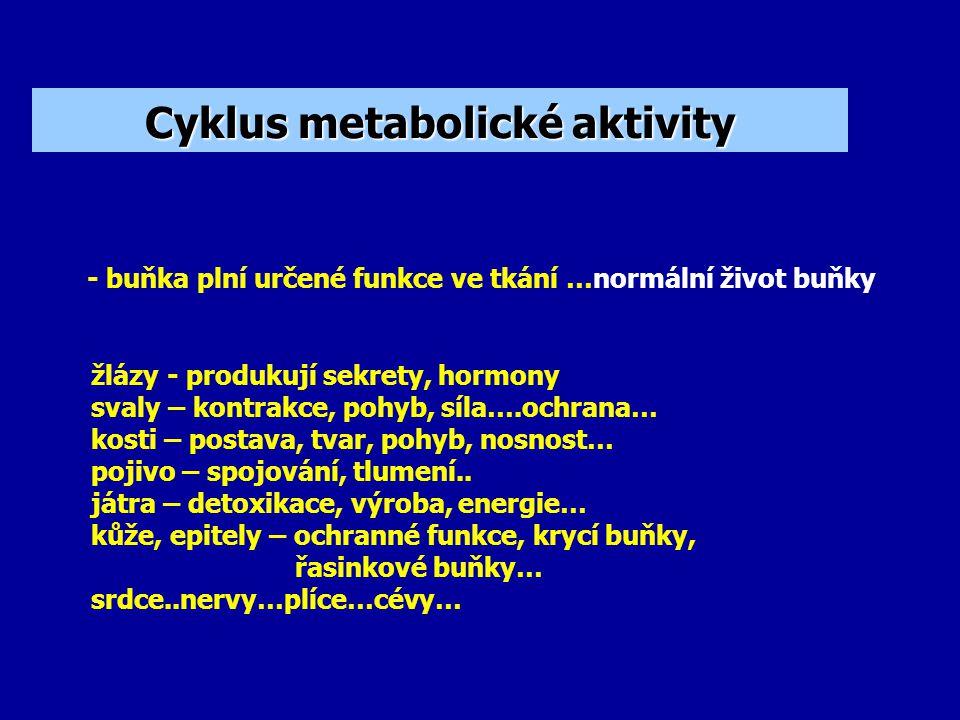 Cyklus metabolické aktivity