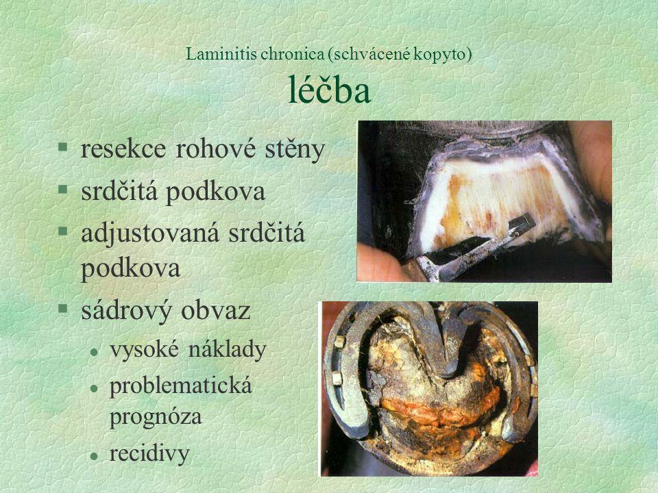 Laminitis chronica (schvácené kopyto) léčba