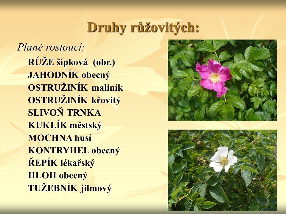 Druhy růžovitých: Planě rostoucí: RŮŽE šípková (obr.) JAHODNÍK obecný