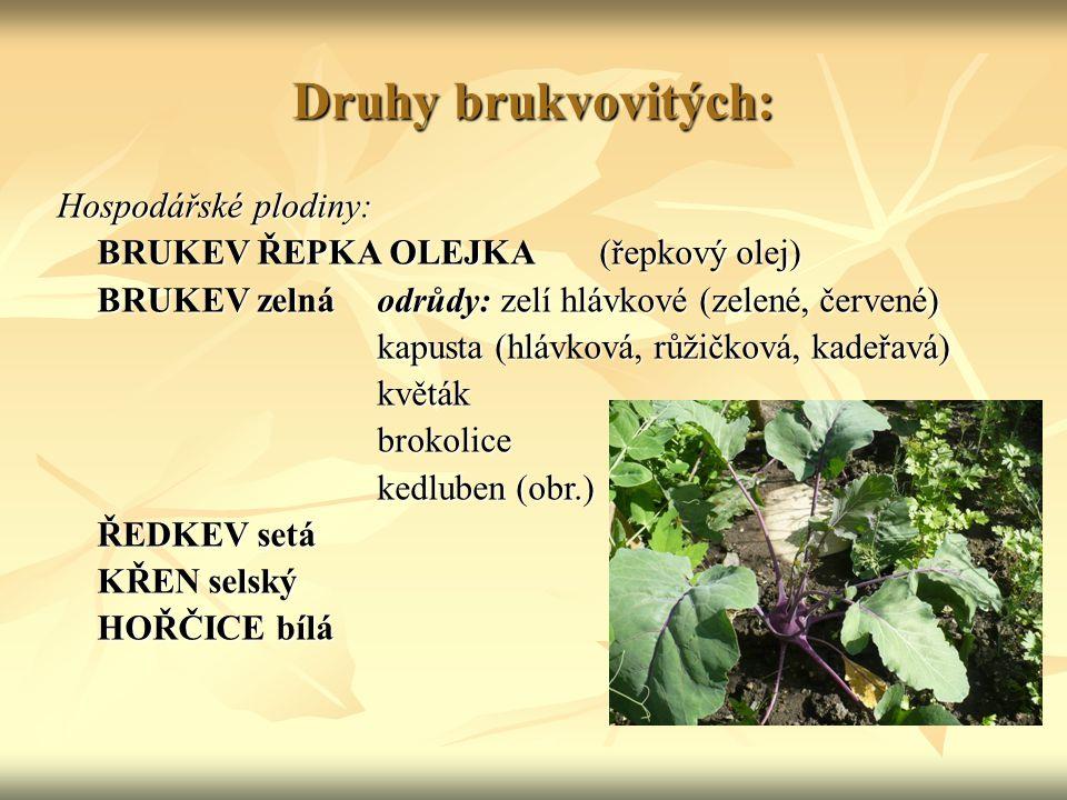 Druhy brukvovitých: Hospodářské plodiny: