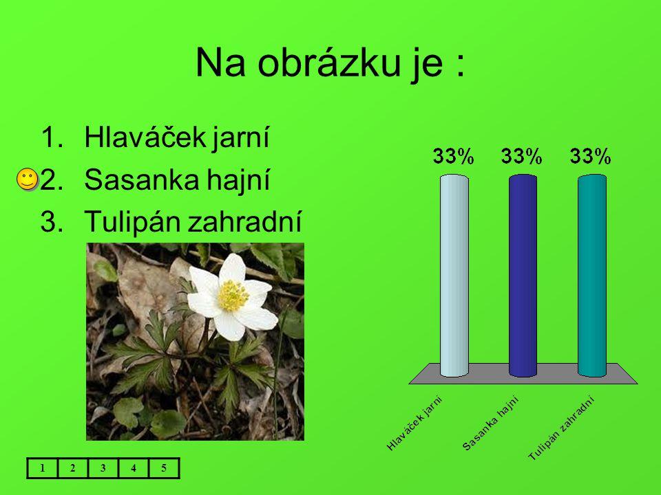 Na obrázku je : Hlaváček jarní Sasanka hajní Tulipán zahradní 1 2 3 4