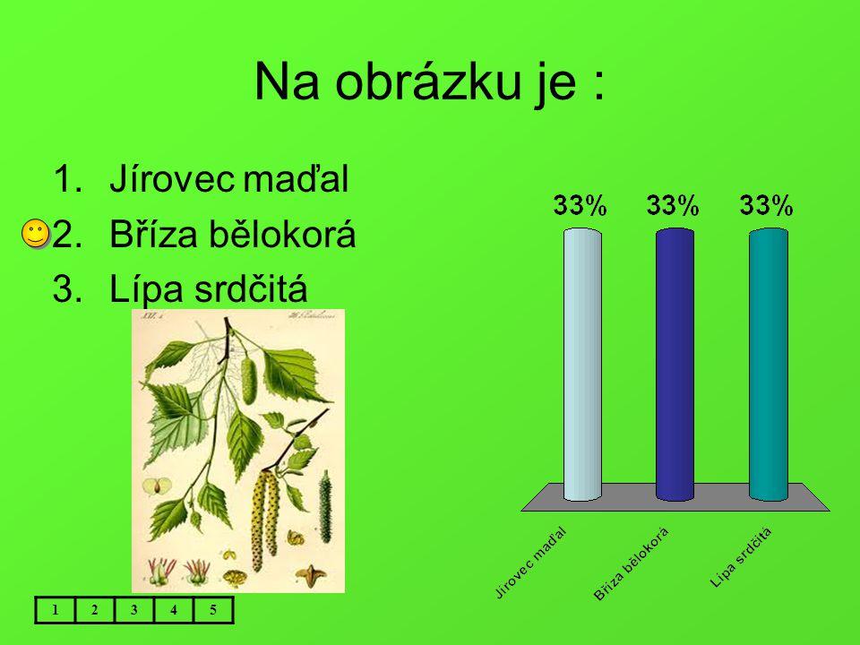 Na obrázku je : Jírovec maďal Bříza bělokorá Lípa srdčitá 1 2 3 4 5