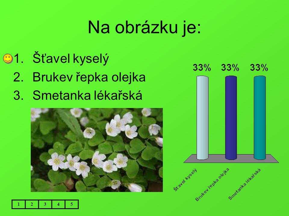 Na obrázku je: Šťavel kyselý Brukev řepka olejka Smetanka lékařská 1 2