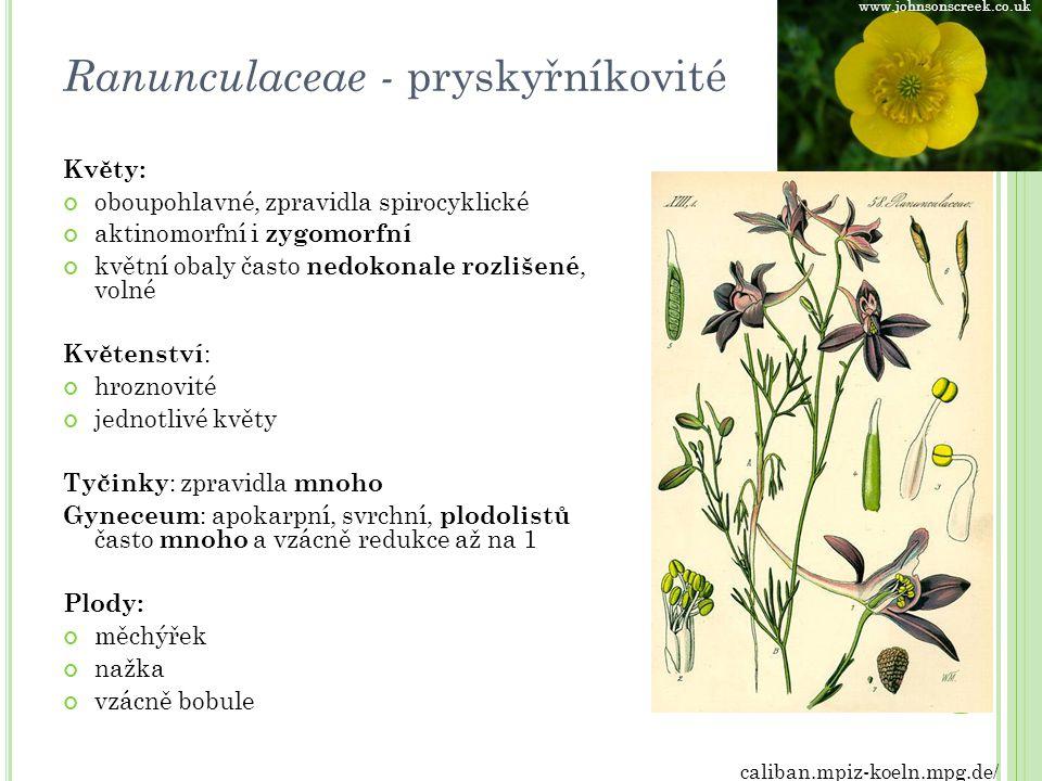 Ranunculaceae - pryskyřníkovité