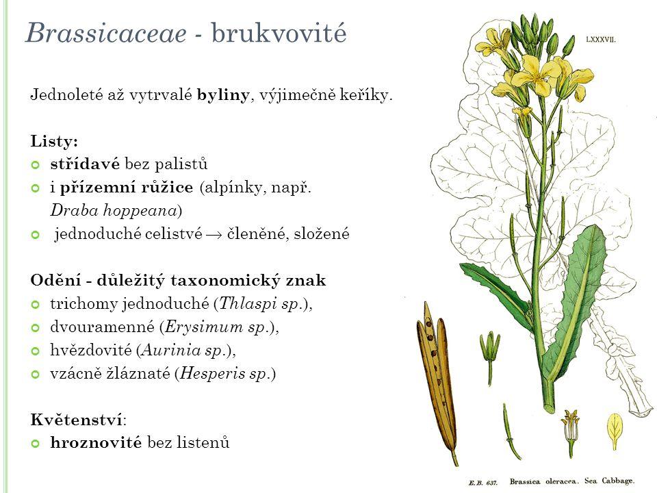 Brassicaceae - brukvovité