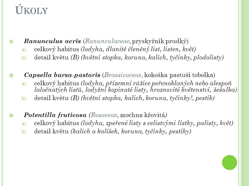 Úkoly Ranunculus acris (Ranunculaceae, pryskyřník prudký)